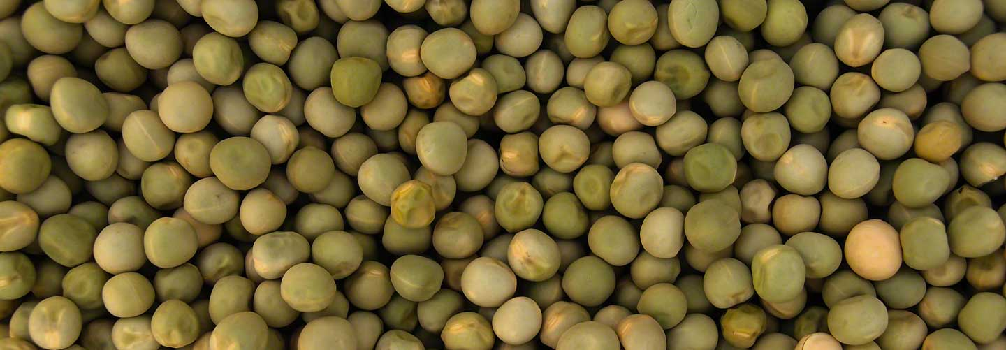 Organic Green Pea Sprouting Seeds
