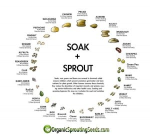 soak-and-sprout-infographic