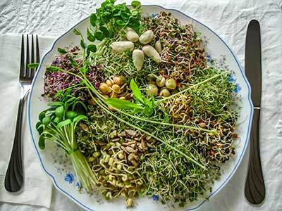The Benefits of Sprouts